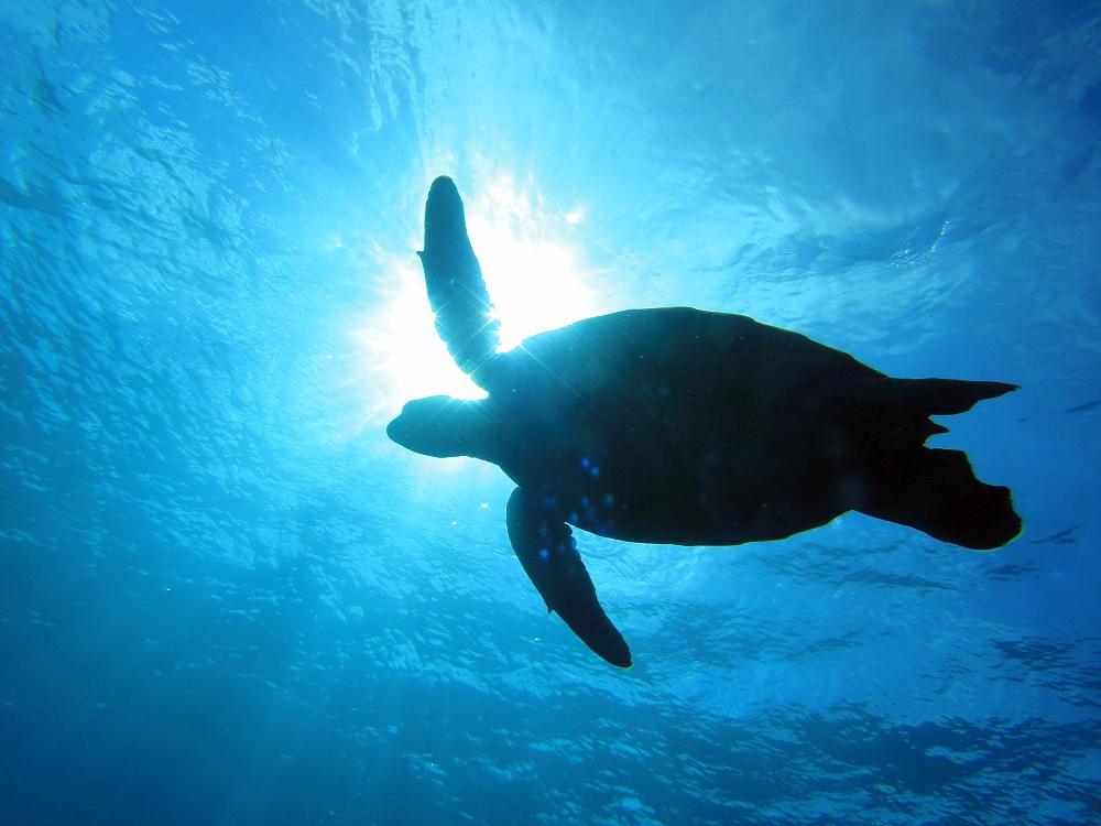 海亀ツアー